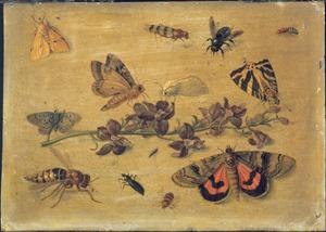 Studie van insekten bij een takje bloemen