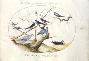 Negen vogels, waaronder enkele zwaluwen