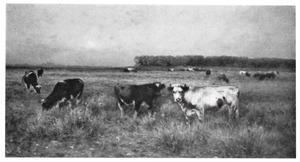 Hollands weidelandschap met koeien bij avond