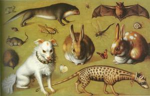 Studie van dieren en insecten