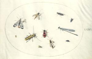 Elf insecten waaronder kevers en een libel