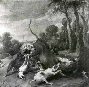 Honden vallen een stier aan
