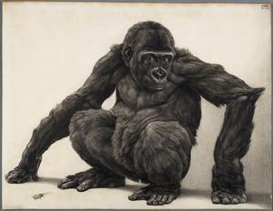 Jonge gorilla en kakkerlak