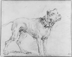 Staande hond met halsband