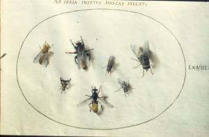 Zeven insecten, waaronder vliegen en wespen