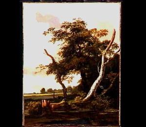 Landschap met dode berkenboom
