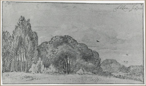 Boslandschap