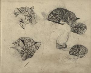 Schetsboekblad met schetsen van katachtigen