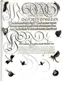 Vlinders, rupsen, vliegen, libellen, slak en slakkenhuis