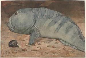 Zeewolf op bodem van aquarium