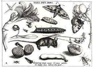 Dode muis, specerijen, bloemen, rups, larve en vlinder