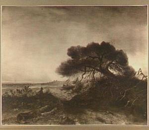 Heidelandschap met denneboom