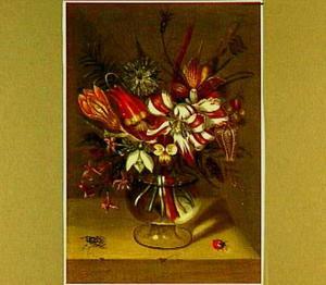 Boeketje met rood-witte tulp in glazen vaas, met vlieg en lieveheersbeestje ernaast