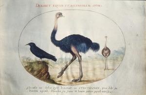 Drie vogels waaronder een struisvogelpaar
