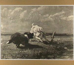 Gevecht tussen een hond en een geit