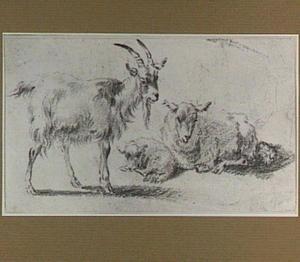 Studies van een geit, een schaap en een lam