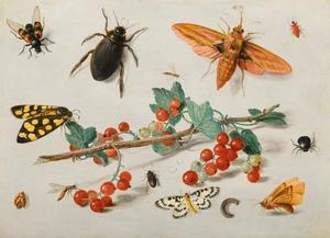 Studie van insecten rondom een takje met rode aalbessen