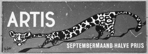 Artis-Septembermaand-Tram-Affiche: uitgerekte panter
