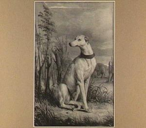 Een hond in een landschap