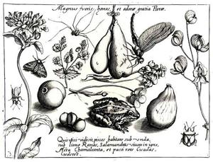 Kikker, bloemen, vruchten en insecten