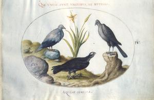Drie roofvogels rondom een plant