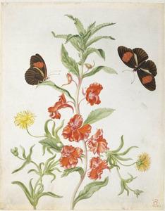 Balsemien, gele ijsbloem en twee postbezorgers (vlinders)