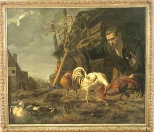 Boer die toekijkt bij een hanengevecht