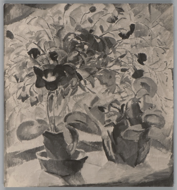Bloemen voor venster