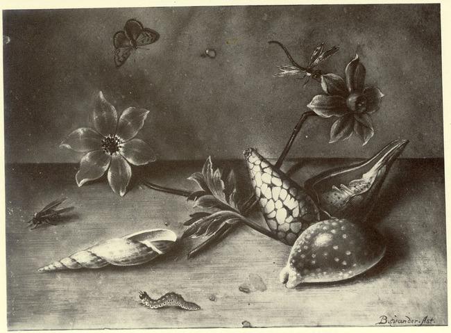 "navolger van <a class=""recordlink artists"" href=""/explore/artists/2800"" title=""Balthasar van der Ast""><span class=""text"">Balthasar van der Ast</span></a>"