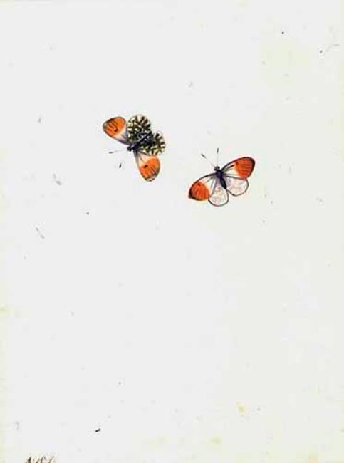 "<a class=""recordlink artists"" href=""/explore/artists/37666"" title=""Antony Henstenburgh""><span class=""text"">Antony Henstenburgh</span></a>"