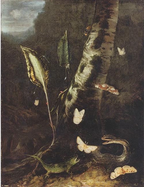 "<a class=""recordlink artists"" href=""/explore/artists/52810"" title=""Otto Marseus van Schrieck""><span class=""text"">Otto Marseus van Schrieck</span></a>"